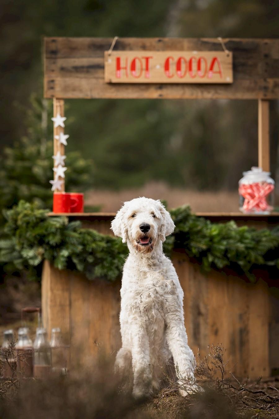 Huur Decor kerst mini repor... van P D LAMMERS